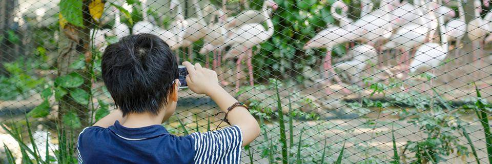 A boy takes a photo of the animals at the zoo