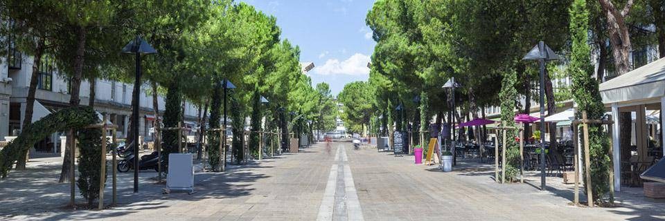 Montpellier tree-lined street