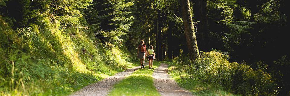 Orienteering in France - sunny walk
